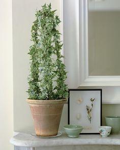 How to make indoor topiary, love this with jasmine