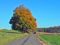 """Country Pennsylvania Road"" ~ Photo via Kimberly and Albrecht Powell: This typical Pennsylvania scene displays colorful maple trees and other fall foliage along a Pennsylvania country road."