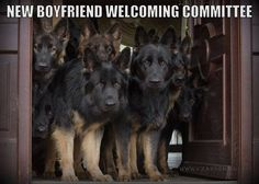 Do you have a new boyfriend? We'll check him! #dog #GSD