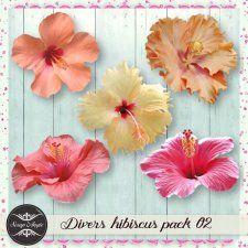 Elements : divers hibiscus pack 02 - Scrap'Angie