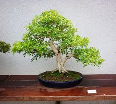 RK:Museo Bonsai Alcobendas - Madrid | Flickr - Photo Sharing!