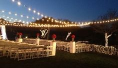 A recent wedding lit up by Bay Area Event Lighting Led Tree, Weeping Willow, Cherry Blossom Tree, Event Lighting, Bay Area, Light Up, Special Events, Entertaining, Wedding