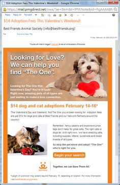 Valentine's Day campaigns - Best Friends Animal Society