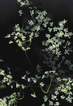 dark floral backgrounds (FOR FREE YO)
