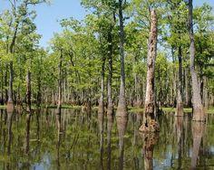 Bayou - Louisianna   on the Bayou