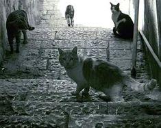 Tra le tante bellezze per cui Roma è famosa nel mondo, i gatti che vivono nelle aree monumentali sono senza dubbio tra le più curiose ed apprezzate, tanto che il comune li dichiarati patrimonio biologico della città. Da quando i gatti erano scacciati e vittime di sterminii incondizionati le cose sono molto cambiate e adesso…