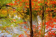 Fall Foliage Tours from Boston - Tours, Trips & Tickets - Boston Travel Recommendations   Viator.com
