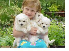 """Razas De Perros Pequeños Para Niños Alergicos. """"Razas caninas ideales para niños alérgicos"""" Hoy día tener un perro en casa es una de la grandes alternativas tanto para chicos y adultos, porque es una amor puro y sin condición, donde se empiezan a estrechar lazos de amor, es tan increíble el vínculo que se empieza a crear que se convierte en un hijo más en casa. Lo que sucede es que hay niños que son alérgicos a los pelos de perro, lo.... Razas De Perros Pequeños Para Niños Alergicos. Para…"""