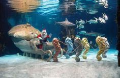 World's Greatest Aquarium | Newport Aquarium, Kentucky USA.