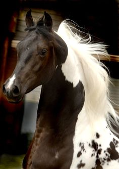 Horse love. What a beautiful mane and coloring!