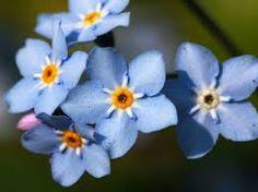 Image result for blue flowers