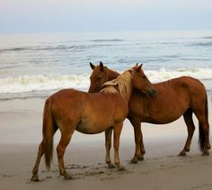 OBX horses awe! Hugs
