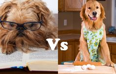 Dogs Baking vs. Dogs Reading
