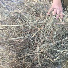 Hay For sale in olney, il: Orchard Grass / Timothy Square Bales