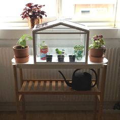 Kid Greenhouses and Kids rooms on Pinterest