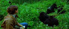 Gorilas en la Niebla: la vida de Dian Fossey en Ruanda