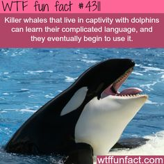 Top 10 Facts About Whales, Dolphins and Porpoises | Whale facts ...
