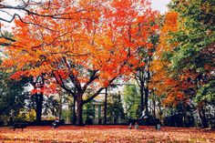 And the trees remind us once again just how beautiful it is to let things go. #Boston