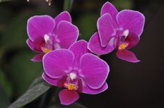 One of my Orchids - 2009 C Roxy Taylor Creative