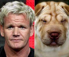 33 Animals Totally Look Like Celebrities
