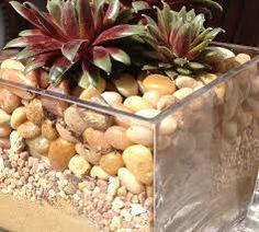 Resultado de imagem para small cactus plants arrangement