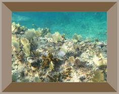photographic artwork - grand bahama - sand tiger shark #shark #bahamas #snorkeling #beauty #travel