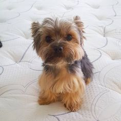 See this Instagram photo by @binxtheyorkie • 44 likes