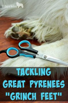 Dog House Air Conditioner Using the Dog Grooming Scissors from Micio Micia to trim Great Pyrenees paws.Dog House Air Conditioner Using the Dog Grooming Scissors from Micio Micia to trim Great Pyrenees paws. Dog Grooming Scissors, Dog Grooming Tips, Dog Grooming Supplies, Grooming Salon, Pyrenees Puppies, Great Pyrenees Dog, Dog Breeds Little, Best Dog Toys, Dog Branding