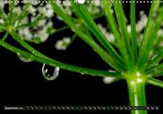 Monatskalender: Tropfen kreativ. Detailreiche Fotografien aus einer Welt von Tropfen. Spiegelungen in Tropfen und die farbenfrohe, kreativen Fotos geben den Charakter dieses Kalenders an. #grün #green #kalender #calendar #farben #colors http://www.calvendo.de/galerie/tropfen-kreativ/?tracking=17