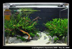 Planted Tank Setup ‹ Chris Kim :: Photo Gallery