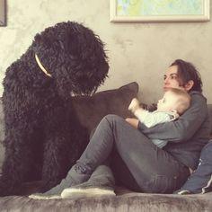 Kron 1 year old - family portrait Black Russian Terrier
