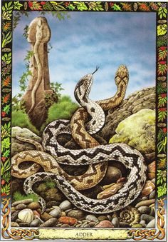 Adder | The Druid Animal Oracle by Stephanie and Phillip Carr | Meaning: transformation, healing and life energy | Reversed: the card is supposed to mean abandoning the power to wound others.