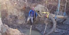 No one thinks they will find a mammoth skeleton, but this farmer found a way to handle it!