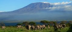 Booking trip Kilimanjaro climbing  tours is easier when you get reliable information from Travel reviews from adventure TripAdvisor reviews - http://www.tripadvisor.com/ShowUserReviews-g293750-d459953-r256031734-Mount_Kilimanjaro-Kilimanjaro_National_Park_Kilimanjaro_Region.html  Budget travel deals and cheap hotels booking are available, trek Kilimanjaro at budget Machame route trip - http://www.kili-tanzanitesafaris.com
