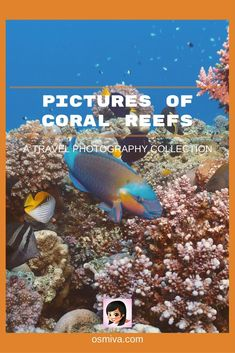 The ocean is a vast and mysterious place, inhabited by living things that create colors and life to this seemingly plain body of water on the surface. One #scubadivingquotestheocean