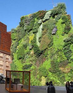 Vertical garden in Madrid…CaixaForum, to be exact! Gewelidige stad, tot 's avonds laat is iedereen op straat, lekker tapas eten op een terrasje!