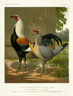 Wright Antique Poultry Prints 1880