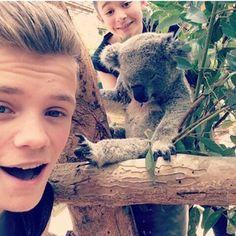 BAM and a koala