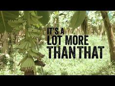 Stick with Foncho to Make Bananas Fair | Fairtrade Fortnight 2014
