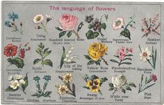 """dryingthebones: """" This is a subject near and dear to my heart. I have several volumes on the language and symbolism of flowers, and I have used flowers and other plants often to convey messages. Some things are better left unspoken, and secret..."""
