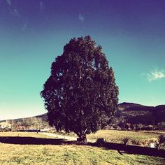 that tree.  #home