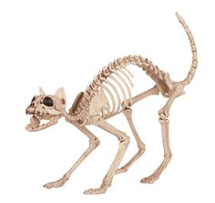 This fake cat skeleton would fit in well in a vignette with cobwebs, spiders and rats. It's somehow more disturbing and certainly a lot less over-done that a fake human skeleton.