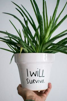 Urban Jungle Bloggers - How can plants survive your holiday?