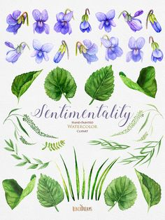 Viola Flowers Watercolor Clipart Floral Violet by ReachDreams