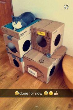 DIY Cat Stuff… Diy cat house made of cardboard boxes! It isn't pretty bu… DIY Cat Stuff… Diy cat house made of cardboard boxes! It isn't pretty but it works. Cool Cat Trees, Diy Cat Tree, Cardboard Cat House, Cardboard Boxes, Cat Tree Plans, Cat House Diy, Cat Hacks, Ideal Toys, Cat Condo