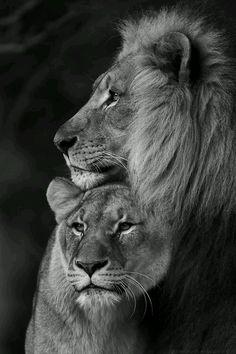 "the-heart-of-the-lion: "" the-heart-of-the-lion: "" Beloved "" """