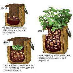 *** Trend Duurzaamheid & Conservering ***  Aardappels in allerhande containers kweken