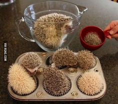 Making hedgehog cupcakes