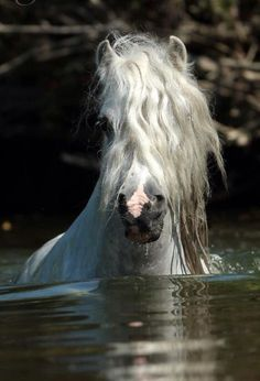 Oh, you pretty horse you! I would love to be swimming with this horse in the water!