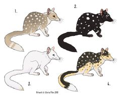Eastern Quoll Point Adoptables by twapa on DeviantArt